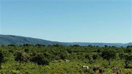 Fazenda situada em Alto Paraíso do Goiás