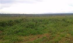 Fazenda em rondonia .BR 364