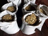 Silagem de milho ensacado