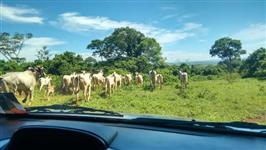 Fazenda em Itumbiara goias perto da capital com documentos tudo ok completo e reserva averbada com