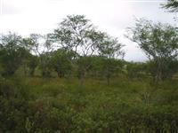 Terreno para reserva