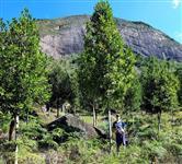 SÍTIO 57 ha e GUANANDI c/10 anos - Muita água e Mata preservada.