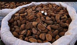 Vendo Castanha do Pará com casca safra 2018
