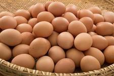 Ovos de galinha caipira em Fortaleza-CE