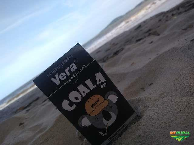 Cigarro de Palha COALA027
