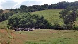 Vende-se bezerros machos e fêmeas de búfalo.