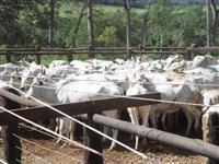 Fazenda para pecuaria em Bandeirantes/MS