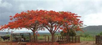 Fazenda a 120 Kms de Brasília-DF