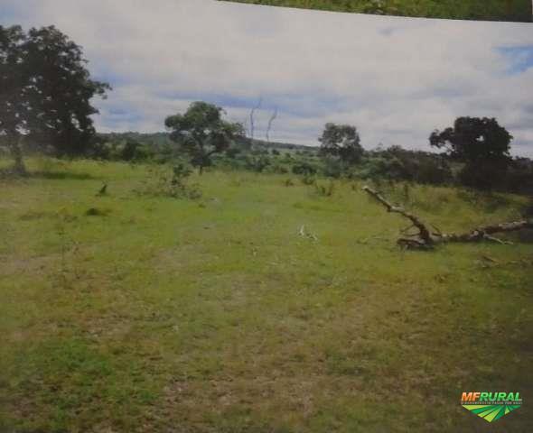 Leilão | Fazenda | 500has e 3.918.00m² | Anastácio/MS