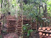 Fazenda de 32 alqueires com 70.000 pés de eucalipto e produção de shiitake em torás organico