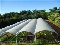 Sítio em Lins/SP 130.000 m² com área orgânica