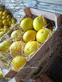 Melão amarelo manga Palmer , tomy