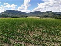 Terreno em Piraí do Sul nas Pedrinhas. 5,4 alq