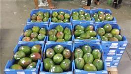 Preciso de um investidor para exportação de frutas do vale do São Francisco Petrolina Pernambuco
