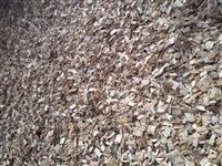 Biomassa, cavacos e Serviços de Reflorestamento