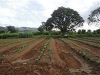Procuro sitio com moradia para arrendamento agrícola