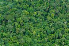 Fazendas para compensação ambiental