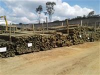 Mourão eucalipto tratado