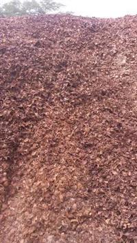 Compro casca de coco seco