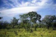 Vendo permuto area 2000 Ha de mata cerrado plana madeira pecuaria