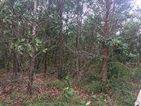 area de reflorestamento