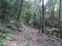 130 hectares em Gramado na Serra Gaúcha.