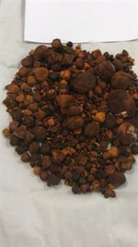 Compro Pedra de Fel/Cálculo Biliar/Ox Gallstones
