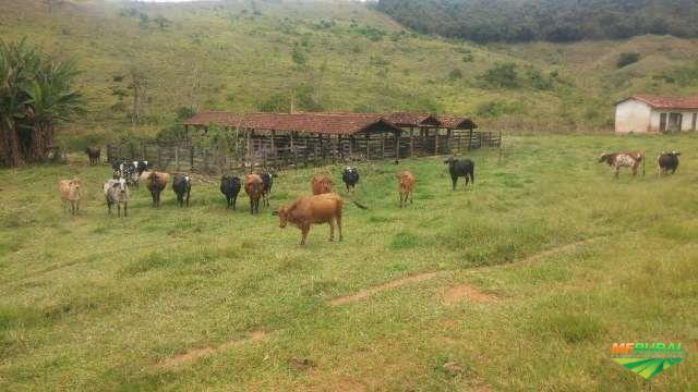 Fazenda Perfeita para Pecuária