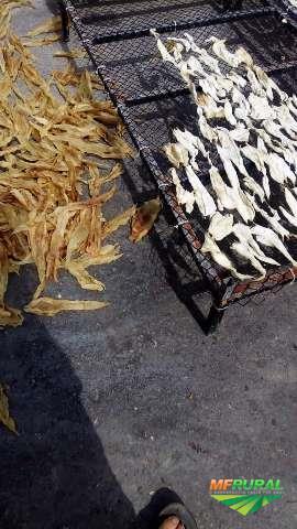 Vendo Peixes,Grude Bucho