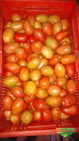 Vendo tomate italiano