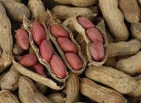 Amendoim vermelho com casca
