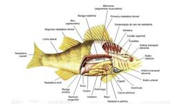 curso básico de piscicultura online