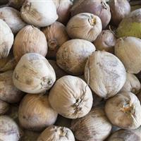 compro coco seco ou carbonizado