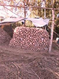 Vendo inhame (Rondônia)