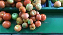 Compro tomate longa vida e italiano