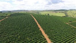 Consultoria para Produção de cafés de qualidade e Exportação de Grãos