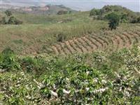 Fazenda Aguanil