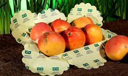 Papel de Seda para frutas e embalagens em geral