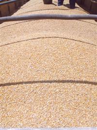 Alvorada Cereais - Venda de Milho Atacada