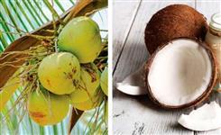 Coco verde e seco para entrega e já descascado