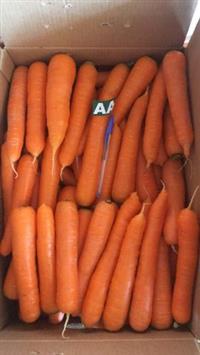 Vendo cenoura