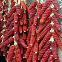 30 Sementes de milho