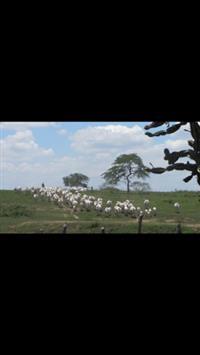Fazenda Jabuticaba