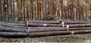 Compro Floresta de pinus.