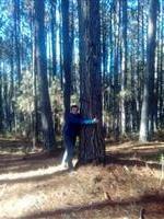 Vendo Floresta de pinus.