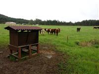 Cocho e Saleiro 120x85x145 Madeira Plastica Agropecuária para Gado