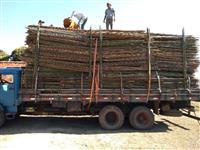 Vendas de bambu