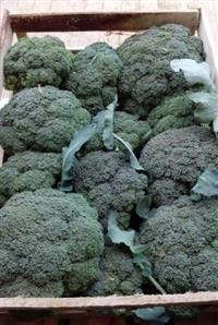 Brócolis ninja, direto do produtor em Minas gerais