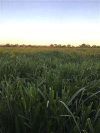 Fazenda no Município de Unaí/MG