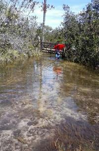 Jaborandi terra 242 hectares por 200 mil